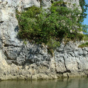 Image 241 - Jean-Pierre sergent, Water, Rocks, Trees & Flowers, April 2014, JP Sergent