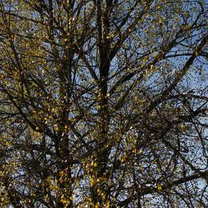 Image 118 - Jean-Pierre sergent, Water, Rocks, Trees & Flowers, April 2014, JP Sergent